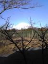 Mtfuji